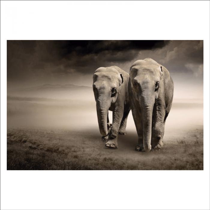 Mural elefante aficano