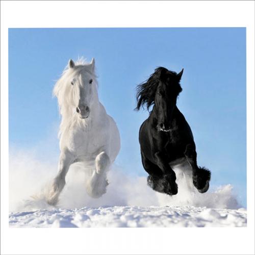 fotos de caballos para mural