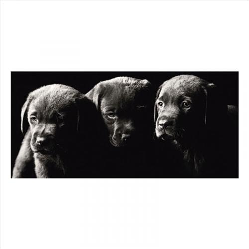 fotos vinilos para paredes cachorros labrador