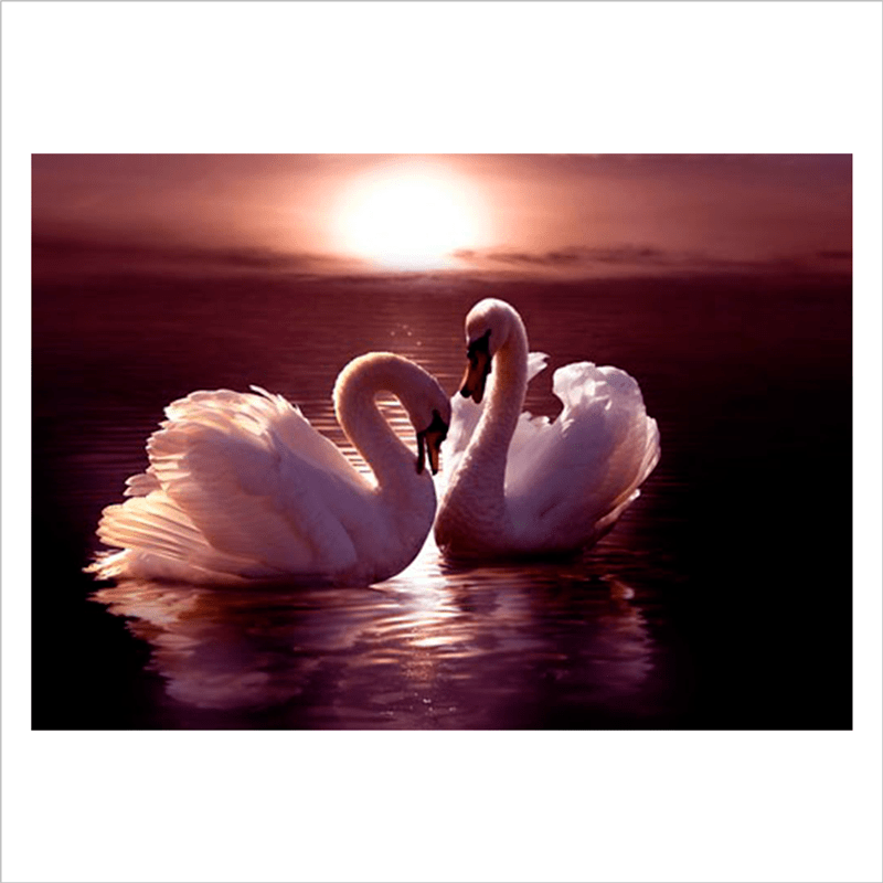 fotomurales paredes cisnes