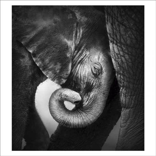 vinilos murales cria de elefante