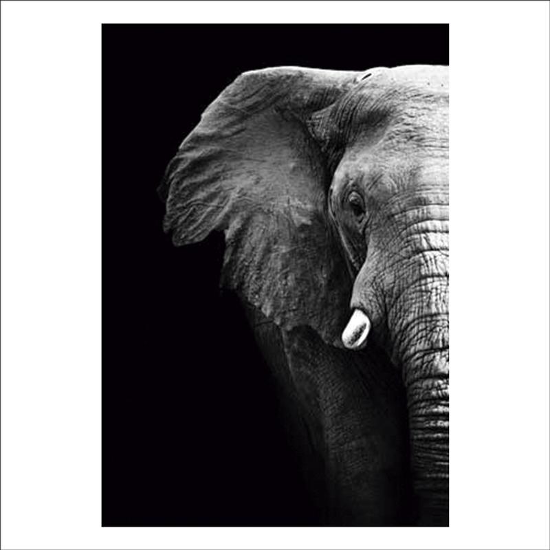 lamina decorativa pared elefante africano
