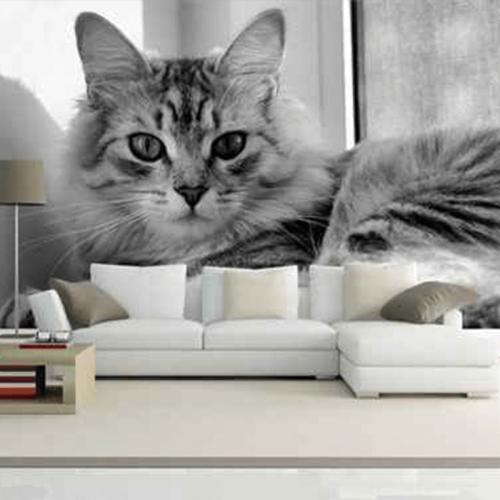 Simulacion gato domestico