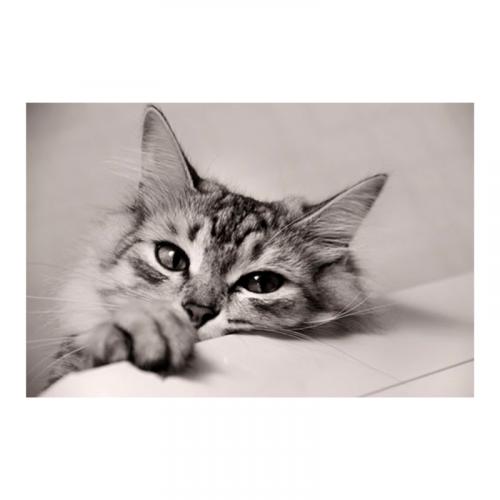 murales para dormitorios gatos