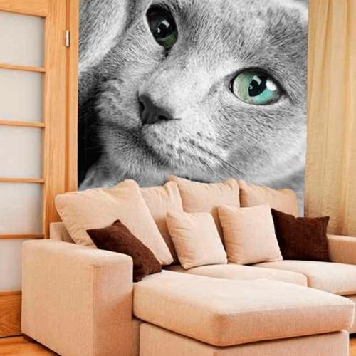 Simulacion colocacion pintura mural rostro de gato