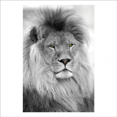 autoadhesivos pared con la imagen de un leon
