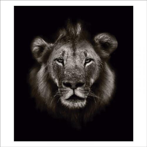 foto murales de leones