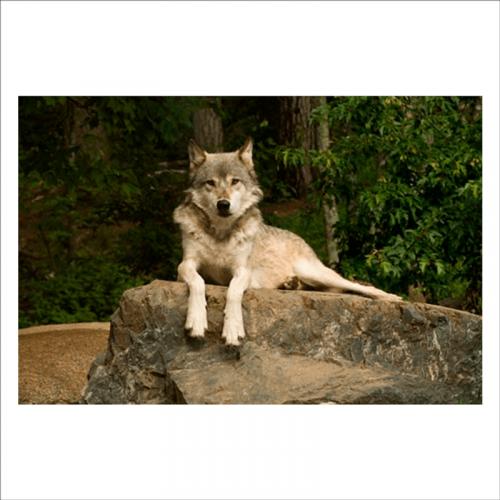 murales salon lobo