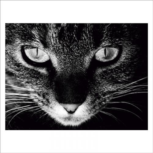 Mural de vinilo mirada de gato