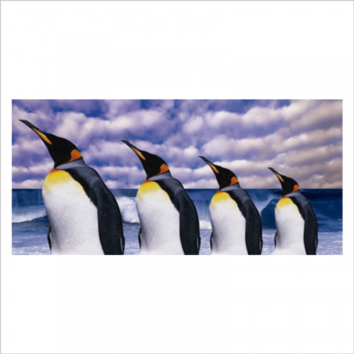 vinilo fotografico pinguinos