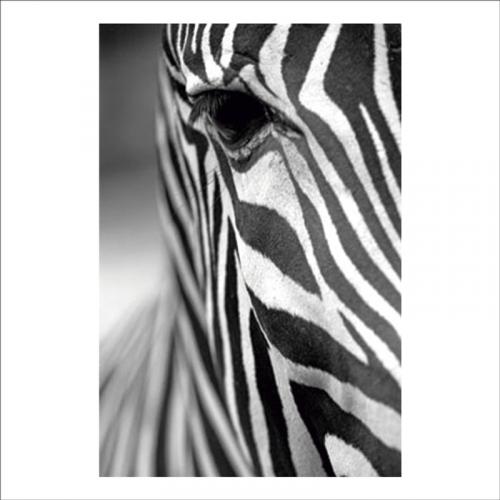 papel adhesivo pared rostro de cebra