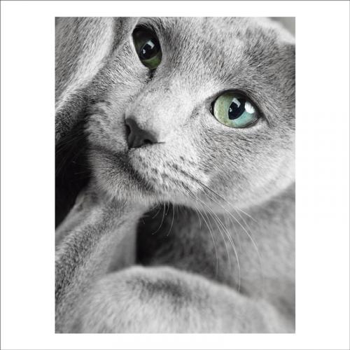 pintura mural rostro de gato