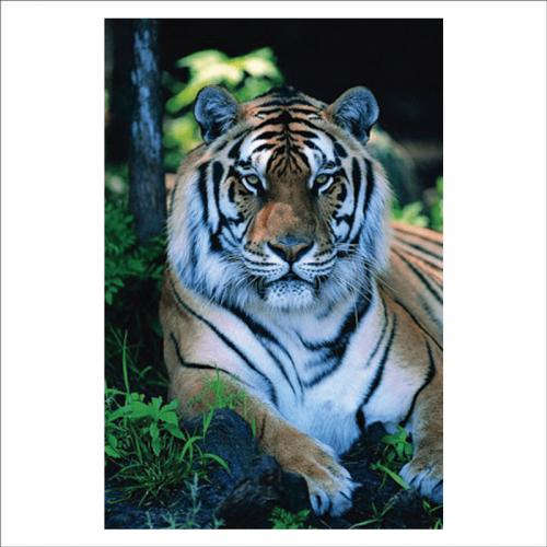 papel pintado mural tigre de bengala