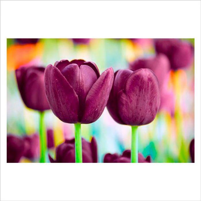 flores en la pared tulipanes