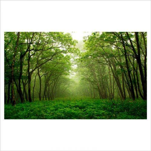 Fotomurales baratos, bosque