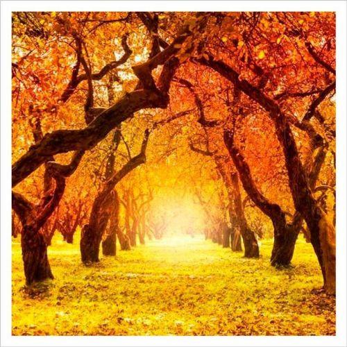 Mural con la foto de un bosque en otoño