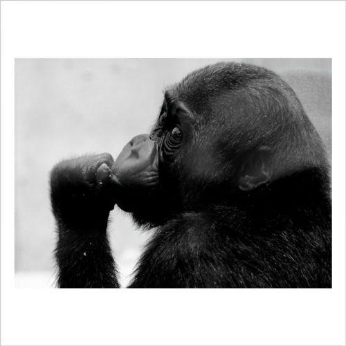 imagen de gorila