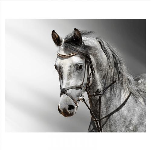 mural caballos