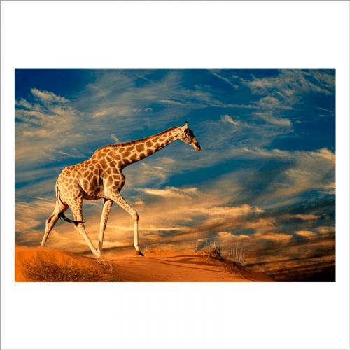 mural jirafa