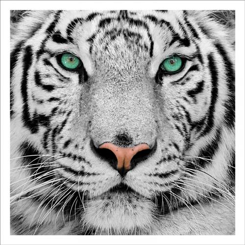 Mural tigre