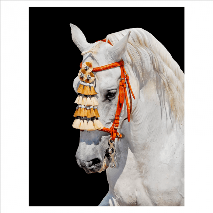 murales de caballos en vinilo