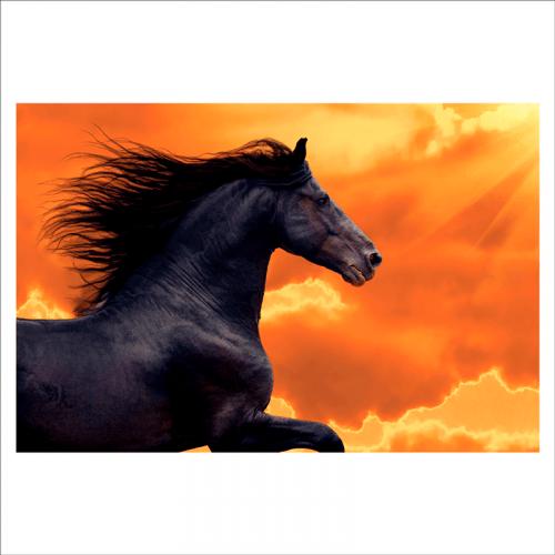murales de caballos